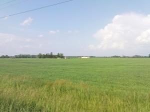 Felder soweit das Auge reicht, irgendwo zwischen Conestogo und Elora